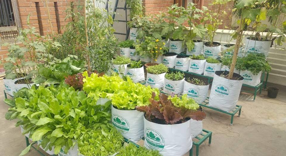 Grow Bag Gardening Tips